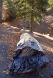 De Boomstam van de boom stock afbeeldingen