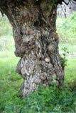 De boomstam van de boom royalty-vrije stock afbeelding