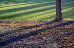 De boomstam van de boom in de herfstzonsondergang royalty-vrije stock afbeeldingen