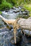 De boomstam van de boom over de rivier Stock Foto's