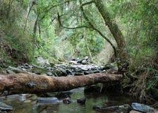 De boomstam van de boom over stroom in tropisch bos Royalty-vrije Stock Foto's