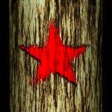 De boomstam van de boom: ster Stock Foto's