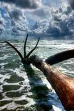De boomstam van de boom van het overzees wordt gesleept die Royalty-vrije Stock Foto