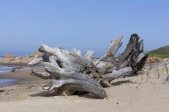 De boomstam van de doodsboom Stock Foto