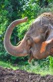 De boomstam van de olifant Stock Foto's