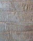 De boomstam van de palm Stock Afbeeldingen