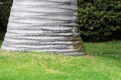 De boomstam van de palm Stock Fotografie