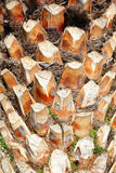De boomstam van de palm royalty-vrije stock foto