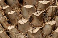 De boomstam van de palm Stock Afbeelding