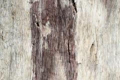 De boomstam van een esp zonder schors, door insecten en atmosferische fenomenen in natuurlijke voorwaarden wordt beïnvloed die Or royalty-vrije stock foto