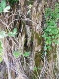 De boomstam van een oude boom stock foto
