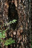 De boomstam van een zieke boom stock fotografie