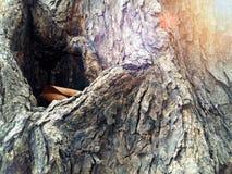 De boomstam van de grote boom stock foto