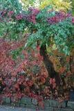 De boomstam van de de herfstboom met gekleurde bladeren wordt geschilderd dat royalty-vrije stock fotografie