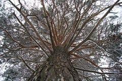 De boomstam van de de winterboom met takken stock foto's