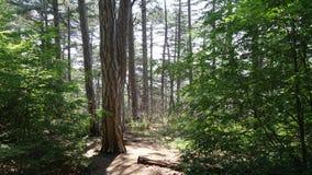 De boomstam van de de zomer bosboom stock foto's