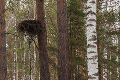 De boomstambos van de nestboom Stock Foto