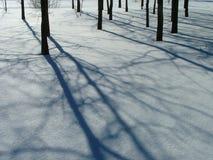 De boomstammen en de schaduwen van de boom Stock Foto's