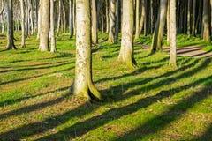 De boomstammen en de schaduwen van de boom Royalty-vrije Stock Foto's