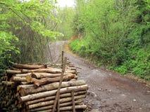 De boomstammen en de weg van de besnoeiing Stock Foto's