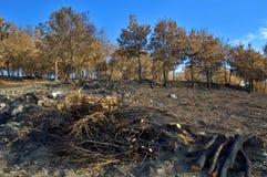 De boomstammen en het hout van de boom Royalty-vrije Stock Afbeelding