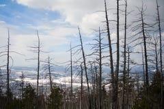 De boomstammen van de bomen in de bergen Stock Foto