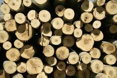 De boomstammen van Cuttes Stock Fotografie