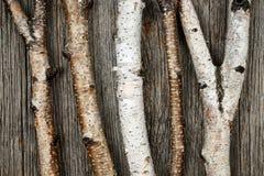 De boomstammen van de berk Royalty-vrije Stock Afbeelding