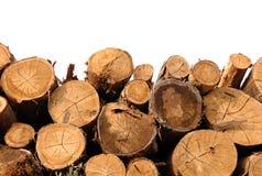 De boomstammen van de besnoeiing op witte achtergrond Royalty-vrije Stock Afbeelding