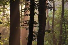 De boomstammen van de boom Royalty-vrije Stock Foto's