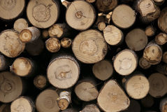 De boomstammen van de boom. stock afbeelding