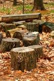 De Boomstammen van de boom Stock Afbeelding