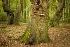 De boomstammen van de boom in bos Stock Afbeeldingen