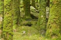 De boomstammen van de boom met mos stock foto