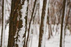 De Boomstammen van de boom in Sneeuw Royalty-vrije Stock Afbeelding