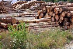 De boomstammen van de het houtindustrie van logboeken stapelden openlucht stock afbeelding