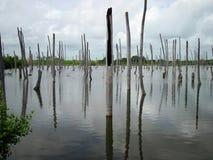 De boomstammen van dode bomen dompelden in water onder Stock Foto