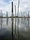 De boomstammen van dode bomen dompelden in water onder Royalty-vrije Stock Afbeeldingen