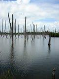 De boomstammen van dode bomen dompelden in water onder Stock Afbeeldingen