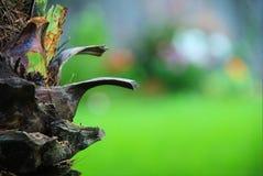 De boomstamsamenvatting van de palm Stock Afbeelding