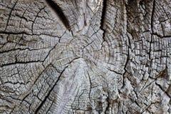 De boomstamtextuur van de boom Stock Foto