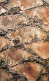 De boomstamtextuur van de palm stock afbeelding