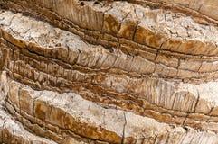 De boomstamtextuur van de palm Royalty-vrije Stock Afbeeldingen