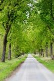 De boomsteeg van de voetpad lopende trog Royalty-vrije Stock Afbeeldingen
