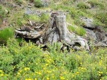 De boomstomp op de bank van rivier Royalty-vrije Stock Afbeeldingen