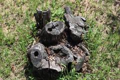 De boomstomp, rotte, Gras, buiten royalty-vrije stock foto