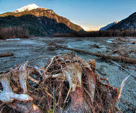De boomstomp van de rivieroever met bergen bij zonsopgang Royalty-vrije Stock Foto's