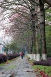 De boomstraat van de kapok stock foto