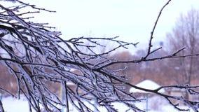 De boomtak is behandeld met sneeuw in een de winterdag tegen de achtergrond van de speelplaats stock video