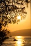 De boomtak en zonsondergang van de pijnboom royalty-vrije stock fotografie